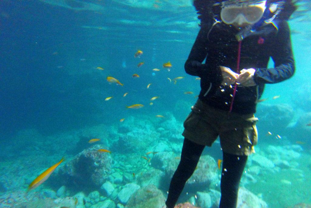 シュノーケルを付けて、美しい水中の世界を堪能してください!